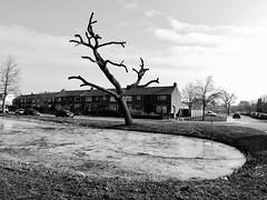 Landsmeer (Simon Oud) Tags: landsmeer sculpture simonoud