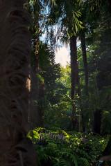 Forest on the San Pancrazio Island (Bephep2010) Tags: 2018 7markiii alpha botanischergarten brissago brissagoislands brissagoinseln farn ilce7m3 insel isolagrande isoledibrissago palme sel24105g sanpancrazio schweiz sommer sony switzerland tessin ticino wald botanicalgarden fern forest island palm summer ⍺7iii ch
