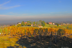 ER 181111 (29) (Paolo Bonassin) Tags: italy emiliaromagna zolapredosa zolapredosaviaantoniobertoloni vigneti vineyards filari rows autumn colorsofautumn coloridautunno