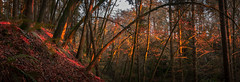 Beams (Dáire Cronin) Tags: clare glens amber autumn light sunset trees limerick