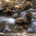 Virginia Creek in October
