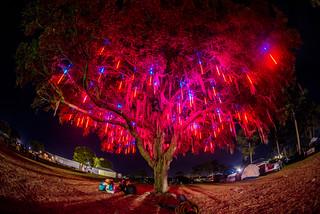 living tree - Jamie Seed