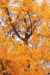 Nature Colors (karenmansoldo) Tags: nature trees botany milan italy autumn fall orange