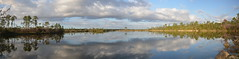 PINE GLADES LAKE (concep1941) Tags: lakes water reflection clouds sky evergladesnationalpark