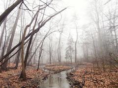 Forest Creek (JMS2) Tags: nature fog stream creek trees misty scenic landscape park winter bare mood