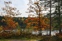 Colorful autumn memory. (Bessula) Tags: bessula nature autumn fall trees leaves lake water path sky landscape forest scenery coth5 ngc