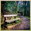 Woodland Bench (Julie (thanks for 8 million views)) Tags: 2019onephotoeachday hipstamaticapp iphonese squareformat bench path woodland kellyswood newross wexford ireland irish green foliage hbm 100xthe2019edition 100x2019 image15100