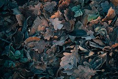 Echo of the Wood (Tom Levold (www.levold.de/photosphere)) Tags: afsnikkor70300mmed fujixt2 köln nature forest metabonesnikonfadapter königsforst cologne wood wald natur laub blätter foliage leaves winter