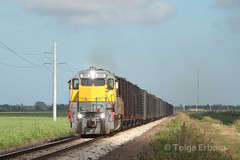 Bryant Turn (TolgaEastCoast) Tags: southcentralfloridaexpress scfe south florda florida pahokee belle glade ussc united states sugar corporation gp402 sugarcane train trains railroad