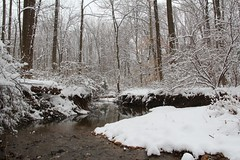 Tranquil brook (seventh_sense) Tags: winter snow ice cold frozen freeze freezing snowing snowfall blizzard flurry flurries forest woods nature tree trees leaf leaves landscape wonderland calm tranquil quiet peace peaceful scene scenery natural snowflake snowflakes brook river stream creek water