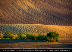 Czech Republic - South Moravia - Iconic rolling fields at Autumn Evening Light (© Lucie Debelkova / www.luciedebelkova.com) Tags: moravskétoskánsko moraviantuscany southmoravia jižnímorava rolling fields hills morava moravia moravian south czechrepublic czech českárepublika česko ceskarepublika cesko czechia europe centraleurope europeanunion eu world exploration trip vacation holiday place destination location journey tour touring tourism tourist travel traveling visit visiting wwwluciedebelkovacom luciedebelkova luciedebelkovaphotography landscape nature autumn fall warm outdoor texture tree trees field hill