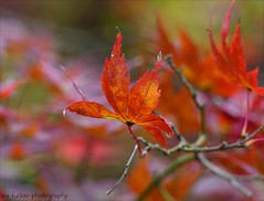 The best angle from which to approach any problem.... (itucker, thanks for 4.5+ million views!) Tags: macro bokeh hbw maple acer dukegardens