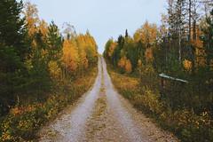 Autumn road (Klas-Herman Lundgren) Tags: dalarna sweden gimmen autumn oktober forest trees road skog green orange red travel gul yellow dusk skymning sifferbo se höst väg