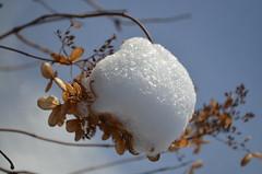 В снежной шапочке набекрень. (Angelok-Happy) Tags: снежнаяшапочка зима снежинки волшебствозимыснежнаяшапочка макро