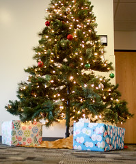 UC Christmas Tree (UWW University Housing) Tags: uww uwwhousing trees christmastrees happyholidays