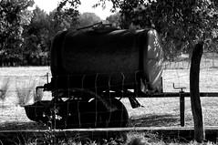 Abreuvoir (jegauberti) Tags: abreuvoir eau animaux vaches moutons