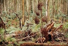 Lyonville Spring in Winter (Katie Tarpey) Tags: australia victoria daylesford lyonville lyonvillespring winter nature landscape nikkor50mm14 nikonfm10 35mm film agfavistaplus200 bush