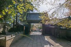 Arashiyama - Kyoto, Japan (inefekt69) Tags: arashiyama kyoto japan nature nikon d5500 京都 日本 嵐山 sakura cherry blossoms flowers spring hanami さくら 桜 花見 water river katsura 桂川 katsuragawa blossom tree