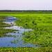 Payne's Prairie Preserve Before Flooding