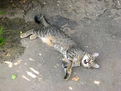 IMG_12574 (marina_pavlova) Tags: vladimir russia cats