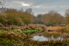 Ryton Nature Reserve 25th November 2018 (boddle (Steve Hart)) Tags: coventry england unitedkingdom gb ryton nature reserve 25th november 2018 steve hart boddle steven bruce wyke road wyken united kingdon great britain canon 5d mk4 6d 100400mm is usm ii 2470mm standard wild wilds wildlife life natural bird birds flowers flower fungii fungus insect insects spiders butterfly moth butterflies moths creepy crawley winter spring summer autumn seasons sunset weather sun sky cloud clouds panoramic landscape