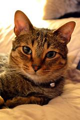 Casual (Gorgons Eye Media) Tags: kitty kitten cat cats animals pets pet michigan oakpark animalphotography nikon nikond3200 d3200 dslr macrophotography closeup smile happy feline
