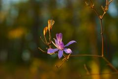 Цветы октября / Flowers of october (Владимир-61) Tags: осень октябрь природа роща цветы желтый зеленый autumn october grove flower yellow green sony ilca68 minolta28135