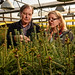 Dr. John Frampton (left) and research assistant Anne Margaret Braham look over a few of the thousands of fraser firs growing in campus greenhouses.
