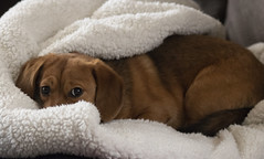 Snuggled (Southern Darlin') Tags: pet friends friendship puppy freya dog photography photo portrait
