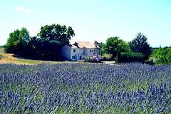 Casas de cuento de hadas (alan_navas1983) Tags: flickr trip travel naturaleza nature colours paisajes landscape lavande lavanda valensole franceses francia