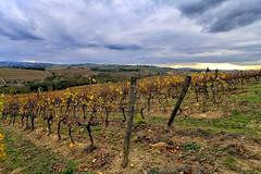 Autunno (MaOrI1563) Tags: vigna vite viti autunno campagna colline cielo toscana tuscany terra firenze florence italy italia