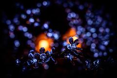 Christmas Jewels (NathalieSt) Tags: christmas europe france hérault languedocroussillon montpellier noel occitanie christmaslights city lumièresdenoel nikon nikonz6 nikonpassion nikonphotography rue street streetphotography ville z6
