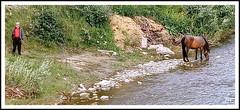Le lien.. (au35) Tags: roumanie rivière river cheval horse paysan lien eau nature