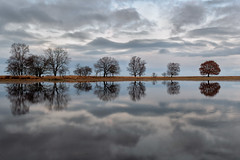 Nice Reflection (Pieter ( PPoot )) Tags: reflection trees water clouds kloosterveen npdwingelderveld