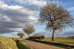 Les 3 arbres (Lucille-bs) Tags: europe france bourgogne côtedor mâlain nature paysage arbre route nuage lumière automne