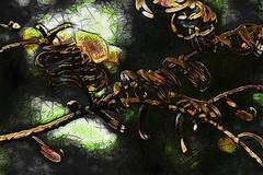 Espiral (seguicollar) Tags: imagencreativa photomanipulación art arte artecreativo artedigital virginiaseguí ramas espirales árbol otoño marrón topaz tratamiento