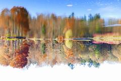 Kopfstand - Headstand (ivlys) Tags: hessen hesse darmstadt steinbrückerteich see lake baum tree wasser water spiegelung reflection herbst autumn farben colours landschaft landscape natur nature ivlys