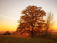 Tree & fire sky (derhalbling) Tags: derhalbling staufenbergniedersachsen tree baum fire sky himmel sunset sonnenuntergang herbst autumn outdoor landscape landschaft natur nature