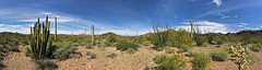 Organ Pipe Cactus NM in AZ (landscapesinthewest) Tags: organ pipe cactus national monument arizona landscape west southwest desert plant american panoramic panorama
