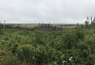 Newfoundland Caribou Hunt, Moose, Bear Hunting 160