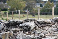 Hadrian's Wall And Beyond (meg21210) Tags: stone roman heddononthewall england hadrian hadrianswall border fence horses houses field trees