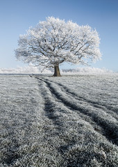 Frozen Tree (peterwilson71) Tags: beautiful exposure grass horizon house ice sky landscape nature outdoors path tree travel view frozen cold winter frost tracks