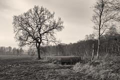 Winter rest (Zoom58.9) Tags: tree field grasses nature landscape europe germany cuxland niedersachsen wehden bw baum felder gräser natur landschaft europa deutschland sw monochrome sky himmel