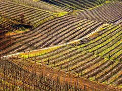 Rolling hills of Langhe (sony73*) Tags: langhe piedmont piemonte hill hills rural countryside inland green grass vineyard vineyards path road nature cuneo alba autumn scenic outdoor tranquillity europe fields curve curved barolo la morra