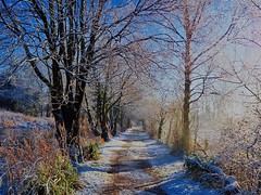 Towpath,  Walton Summit length, Lancaster Canal, Whittle-le-Woods, Chorley, Lancashire, UK (BrianDerbyshire) Tags: uk lancashire chorley whittlelewoods olympus canal waltonsummitlength lancastercanal snow winter trees towpath