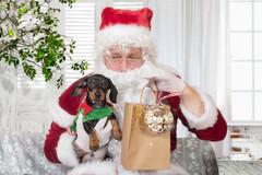 Peanut-3.jpg (___INFINITY___) Tags: 2018 6d aberdeen christmas mrsmurrays animal canon catdoghome darrenwright dazza1040 dog eos infinity pet portrait santa