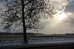 A Tree, a Field, and Clouds (joeldinda) Tags: nikon 1v2 nikon1v2 v2 2019 michigan eatoncounty roxandtownship roxana winter weather snow sky cloud tree woodlot fields plowed 4405 january