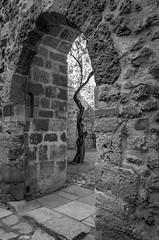Lonely tree (Castelo de S. Jorge, Lisboa) (Tormod Dalen) Tags: lisboa portugal tamron 1750 travel street architecture europe lisbon lisbonne tamron1750 tree arbre castelosãojorge ptbw