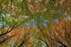 Autumn Zenith (Notley Hawkins) Tags: httpwwwnotleyhawkinscom notleyhawkinsphotography notley notleyhawkins 10thavenue fall leaves color woods boonecountymissouri tree forest wood rural october 2018 robyfarmroad trees texture foliage colors autumn canopy sky lookingup up zenith