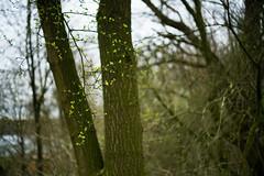 Sprout 3 (Amselchen) Tags: makroplanart250 makroplanart250ze zeiss carlzeiss tree plants sony bokeh blur dof depthoffield makroplanar t 250 sonyilce7rm2 zeissmakroplanart250ze mc11